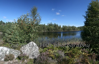 Loch an Eilean, Rothiemurchus, guided walk in the Cairngorms near Aviemore.